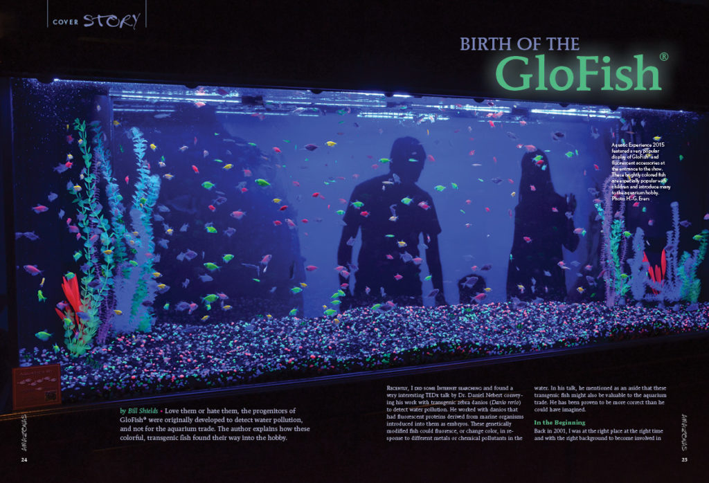 Love them or hate them, the progenitors of GloFish® were originally developed to detect water pollution. Highly experienced commercial breeder Bill Shields was at the right place at the right time and shares his story of how the GloFish was brought into commercial production.