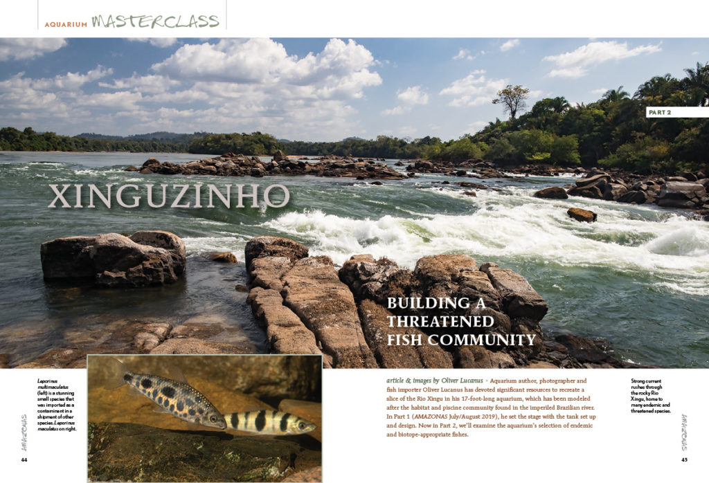 In part 2 of our Aquarium Masterclass by Oliver Lucanus, we examine the aquarium's selection of endemic and biotope-appropriate fishes recreating a slice of the Rio Xingu.