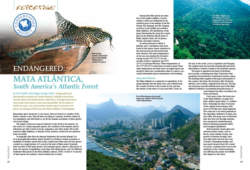 Home to unique endemic fishes, most recognizable among them the unique cory cats of the genus Scleromystax, Erik Schiller illuminates South America's Atlantic Forest, the endangered Mata Atlântica.