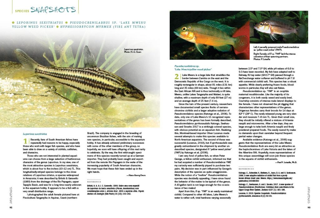 AMAZONAS Magazine's Species Snapshots bring you the newest, hottest and most arcane freshwater aquarium fish from around the globe. In this issue, we share in-depth looks at Leporinus sexstriatus, Pseudocrenilabrus sp. 'Lake Mweru yellow weed picker' and Hyphessobrycon myrmex (the fire ant tetra). This exclusive content is found nowhere else but the pages of AMAZONAS Magazine!
