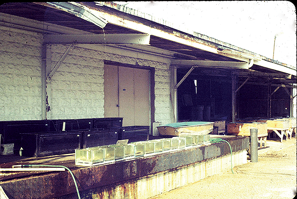 Aqualife Research's home in an old ice house in St. Petersburg, Florida: the world's first marine fish hatchery.