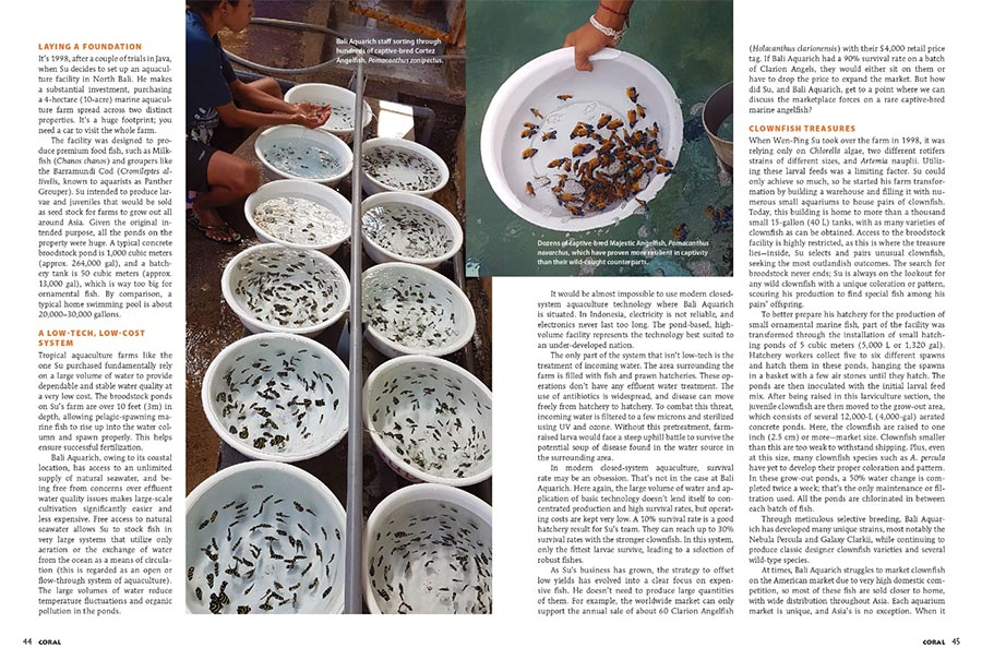 Hundreds of captive-bred marine Angelfish being sorted on the farm at Bali Aquarich. Is this the future? (from the article Holy Grail, Inc., by Vincent Chalias, CORAL Magazine Sept./Oct. 2019)