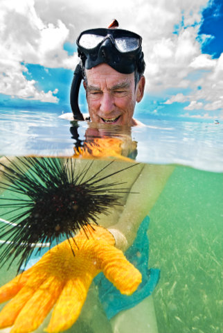 The author with <em>Diadema antillarum</em> broodstock used in his captive-culture research, Islamorada, Florida. Image: Matt Wittenrich.