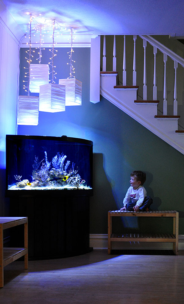 Author's son Ethan, enthralled by Rock Beauties and Florida gorgonians in one of the family's display aquariums. Image credit: Renee Pedersen