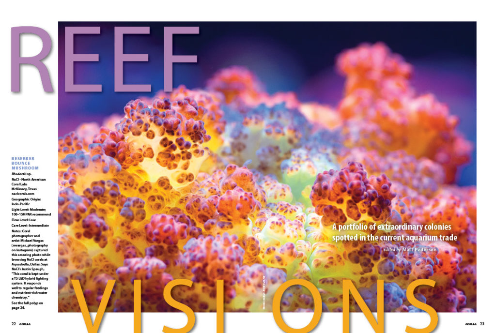 REEF VISIONS returns with a visual feast of oddities and rarities sure to delight reef aquarists!