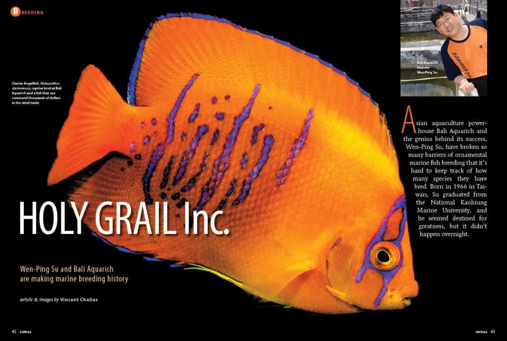 Asian aquaculture powerhouse Bali Aquarich and the genius behind its success, Wen-Ping Su, have broken so many barriers of ornamental marine fish breeding that it's hard to keep track of how many species they have bred. Learn more in HOLY GRAIL, Inc., by Vincent Chalias.
