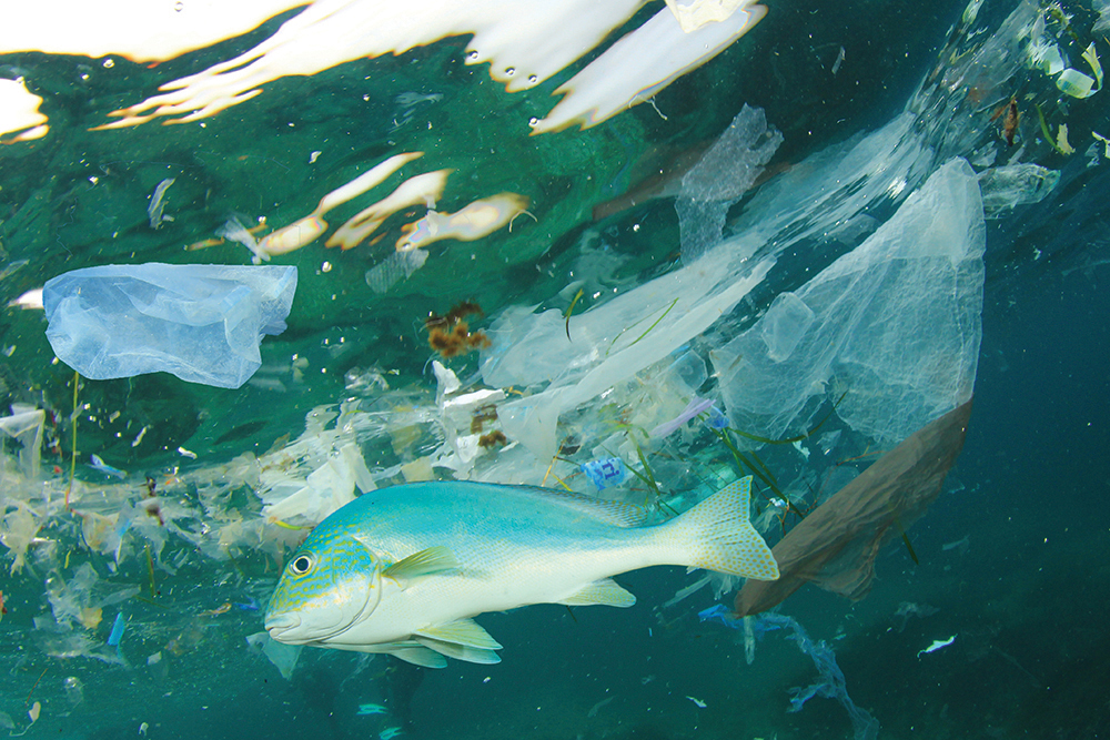 There are now more pieces of plastic in Earth's oceans than stars in the sky. Image: Rich Carey/shutterstock