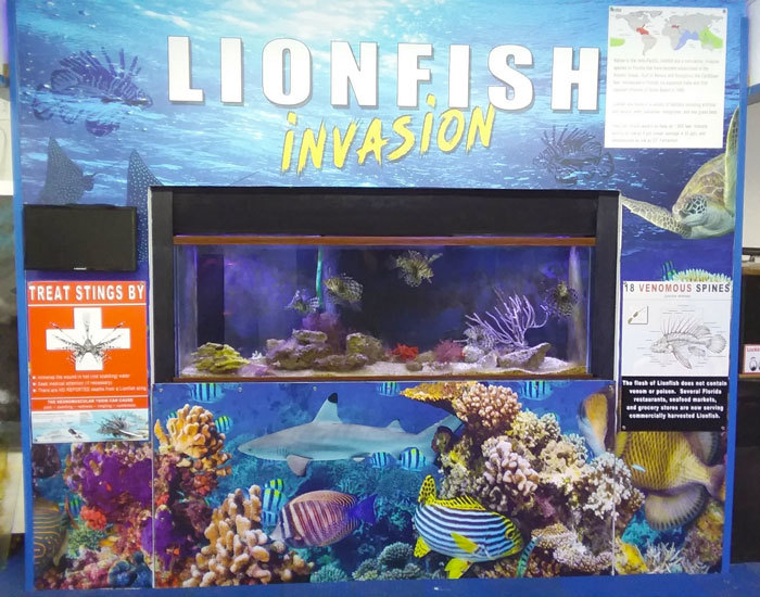 Lionfish Educational Exhibit Program funded this exhibit at the Gulf Specimen Marine Lab in Wakulla County. Photo by Mike Kennison/FWC.