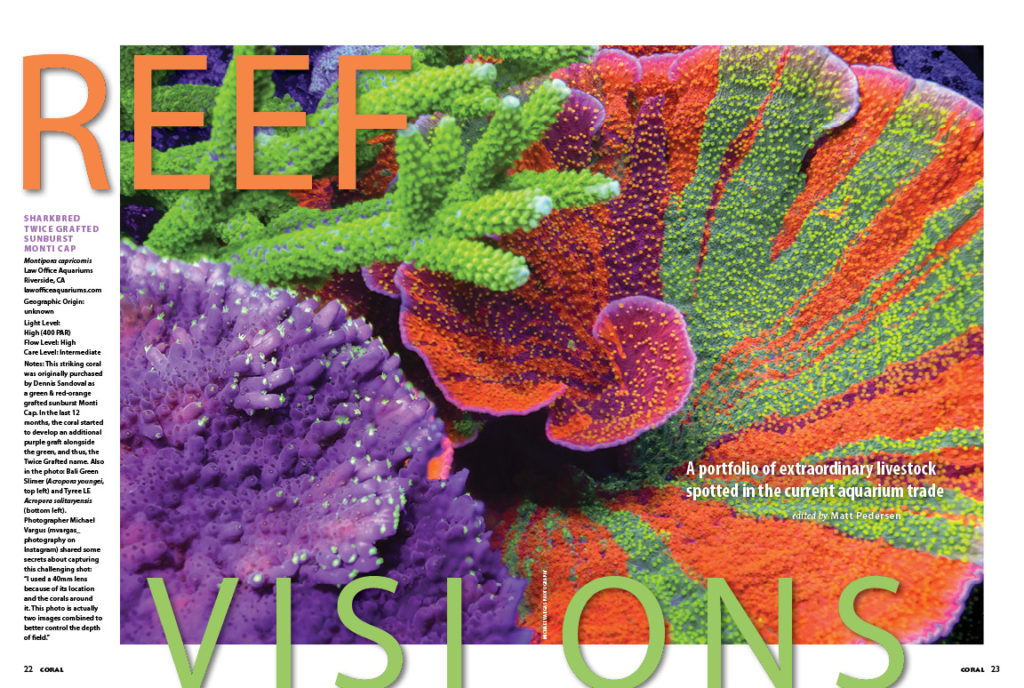 REEF VISIONS returns with a visual feast of rarities and oddities sure to delight reef aquarists.
