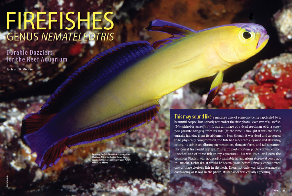 It turns out that Nemateleotris spp., are very well-suited for the home aquarium. Author Scott Michael surveys the genus, examining the natural history and captive care requirements of this alluring group of fishes that are now a mainstay in the pet fish trade.