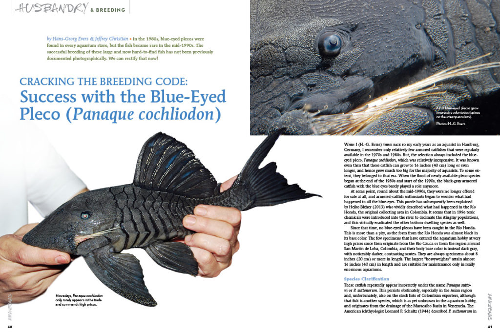 "Beyond a shadow of a doubt, the code has been cracked. Learn how, in ""Cracking the Breeding Code: Success with the Blue-Eyed Pleco (Panaque cochliodon)"", from authors Hans-Georg Evers & Jeffrey Christian."
