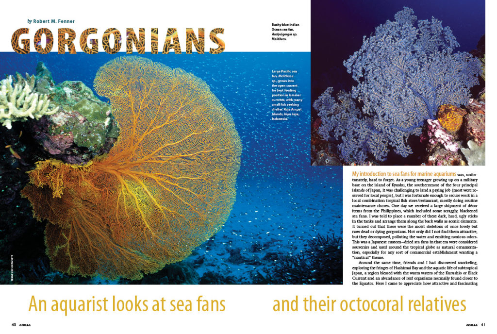 Robert M. Fenner introduces the gorgonians, commonly known as sea fans, sea plumes, sea rods, and sea whips. They are actually stinging-celled animals—Cnidarians—and distant cousins to stony corals, more closely related to the soft corals.