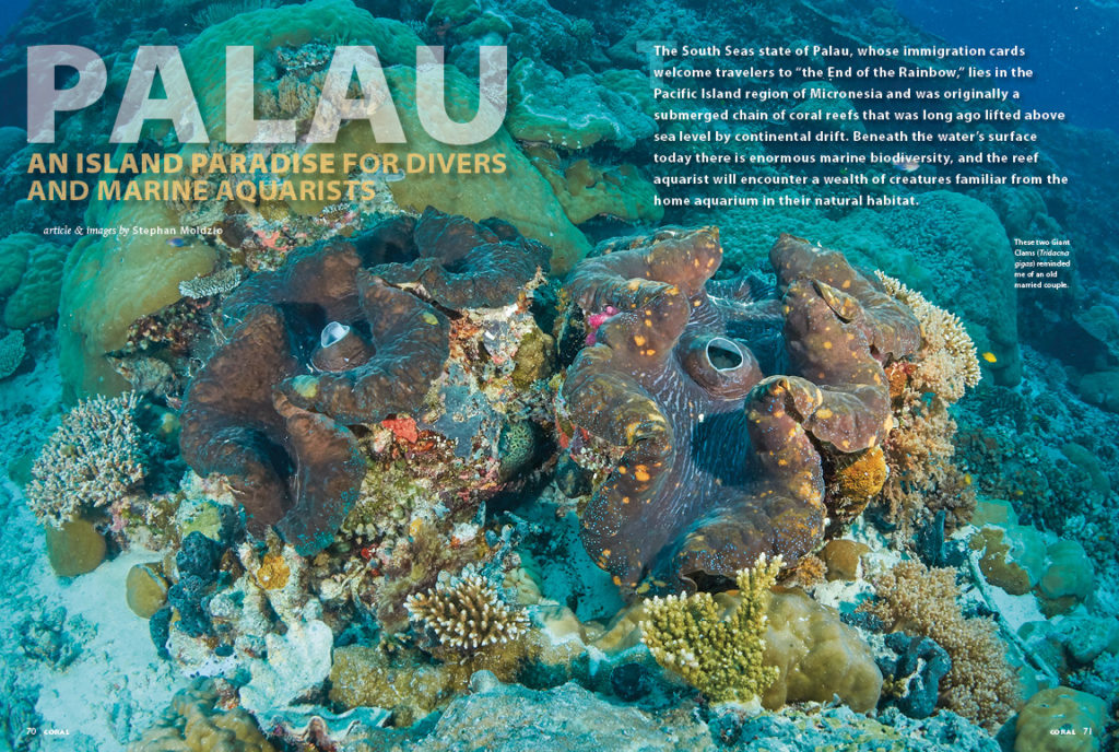 "Palau: An Island Paradise for Divers and Marine Aquarists. Join author Stephan Moldzio as he takes you to the ""end of the rainbow"" in Micronesia's tropical Pacific waters."