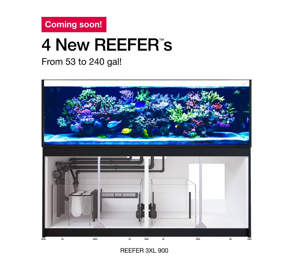 Get a glimpse at the new flagship 240 gallon Red Sea Reefer 3XL 900, one of 4 new models announced by Red Sea.