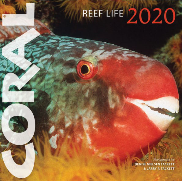 REEF LIFE 2020