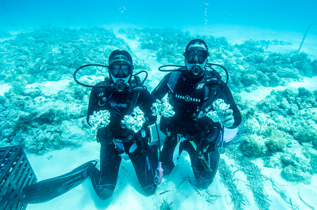 Kara and Philipp Rauch diving on location at the KP Aquatics Live Rock farm off the Florida Keys. Image courtesy KP Aquatics.