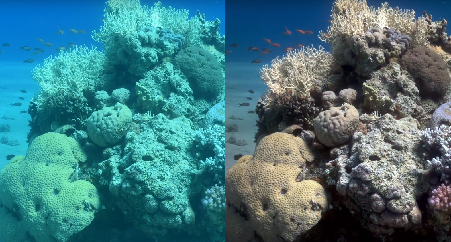 From the video: A before-and-after of the new algorithm when applied to raw underwater photography.
