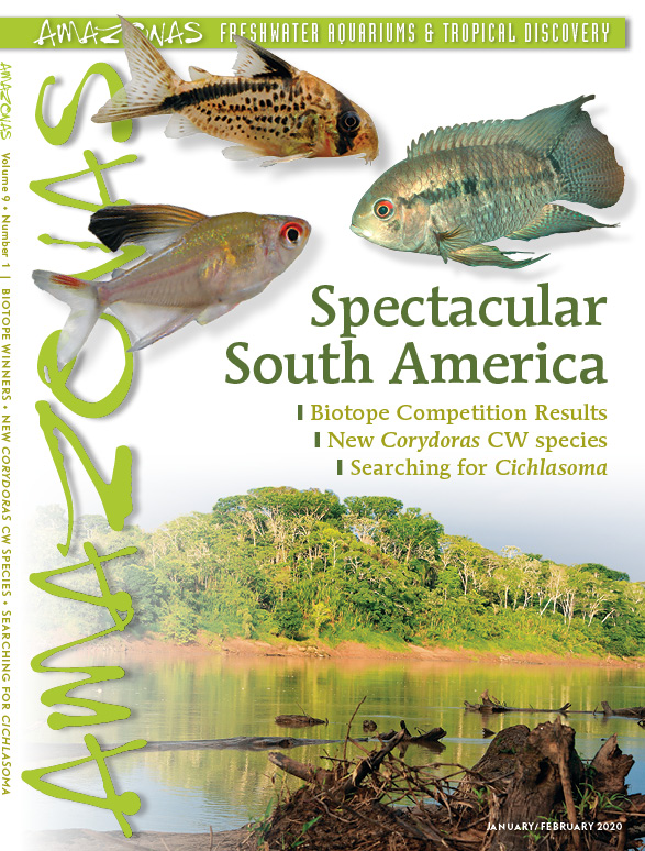 AMAZONAS Magazine, Volume 9, Number 1, Spectacular South America, on sale December 4th, 2019! On the cover: Left: Rosy Tetra (Hyphessobrycon paepkei) and center: Corydoras luxozonus by F. Bitter. Right: Cichlasoma orinocense, by Rainer Stawikowski. Bottom: River near Iquitos, Peru by Ernst Sosna.