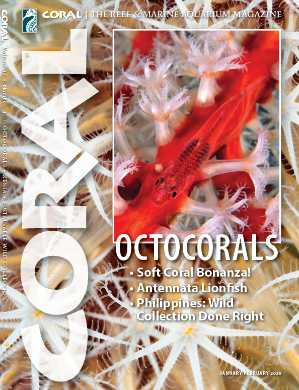 Cover of CORAL Magazine Volume 17, Issue 1 – OCTOCORALS – January/February 2020. On the cover: Ghost Goby, Pleurosicya mossambica. Background: Unidentified octocoral, Great Barrier Reef. Gray Bell/Oceanwide Images.