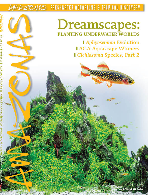 AMAZONAS Magazine, Volume 9, Number 2, DREAMSCAPES, on sale February 4th, 2020! On the cover: Top: Nano aquarium and Danio margaritatus. Photo credits: Friedrich Bitter