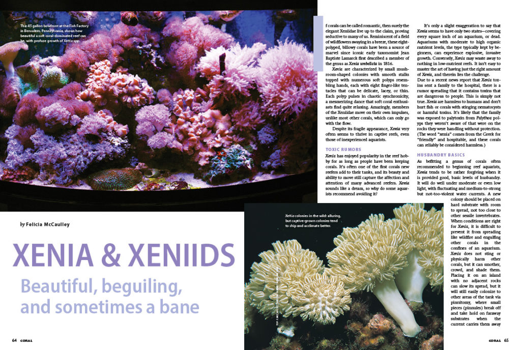 XENIA & XENIIDS—Beautiful, beguiling, and sometimes a bane: Felicia McCaulley shares everything you need to know about these popular yet occasionally problematic pulsing soft corals.