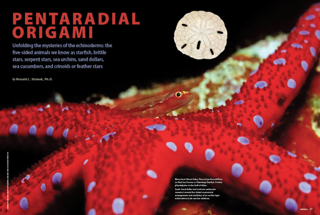 PENTARADIAL ORIGAMI, by Ronald L. Shimek, Ph.D., unfolds the mysteries of the echinoderms: the five-sided animals we know as starfish, brittle stars, serpent stars, sea urchins, sand dollars, sea cucumbers, and crinoids or feather stars.