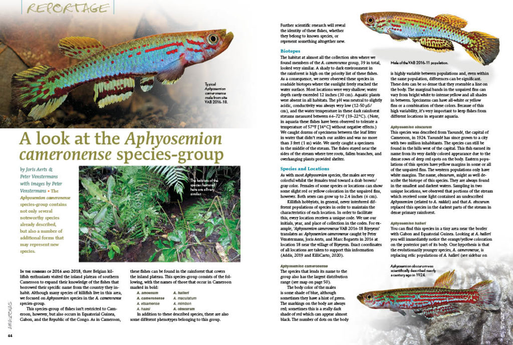 Surpassing the coloration of many attractive coral reef fishes, the incredibly photogenic Aphyosemion cameronense killifish species-group is investigated by Joris Aerts and Peter Venstermans.