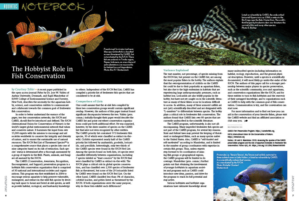 The Hobbyist Role in Fish Conservation, by Deputy Executive Editor Courtney Tobler, is an important lead into this issue's Aquatic Notebook. Also in this section: How zebra danio personalities influence their breeding success, and further discussion about breeding the Blue Eyed Pleco, Panaque cochliodon, which we first reported in the November/December 2019 issue.