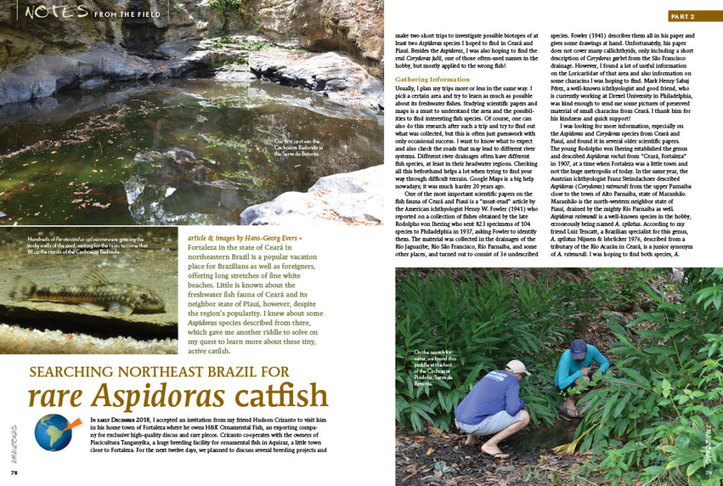 Note From The Field continues with Part 2 of Hans-Georg Evers's journey through northeast Brazil on a quest to discover new and rare Aspidoras catfishes.