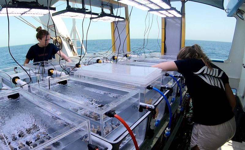 The SeaSim in a box uses technology from the National Sea Simulator, allowing scientists to conduct high tech experiments at sea. Photo: James Gilmour