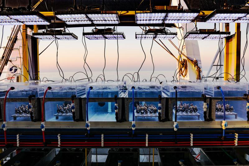 Portable ship-borne aquaria utilized in the search for heat-resistant corals. Image credit: AIMS