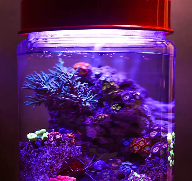 The PicoPro LED from ReefSmart is a purpose-built pico-reef lighting solution designed for a readily available glass jar.