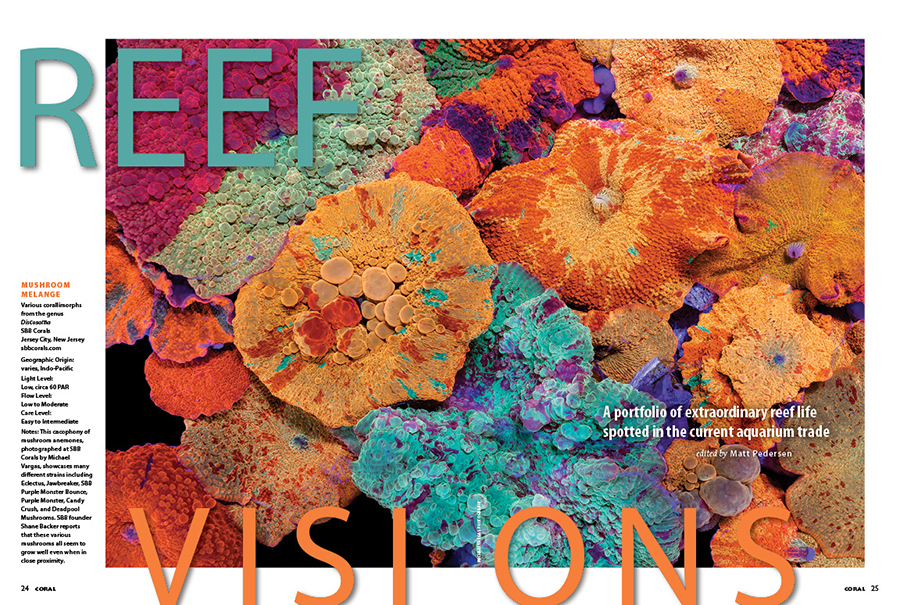 REEF VISIONS: A portfolio of extraordinary reef life spotted in the current aquarium trade. Michael Vargas Photography takes the opening spread with an incredible portrait of luxe mushroom corals photographed at SBB Corals in New Jersey. More exciting corals and fishes await the reader this issue!