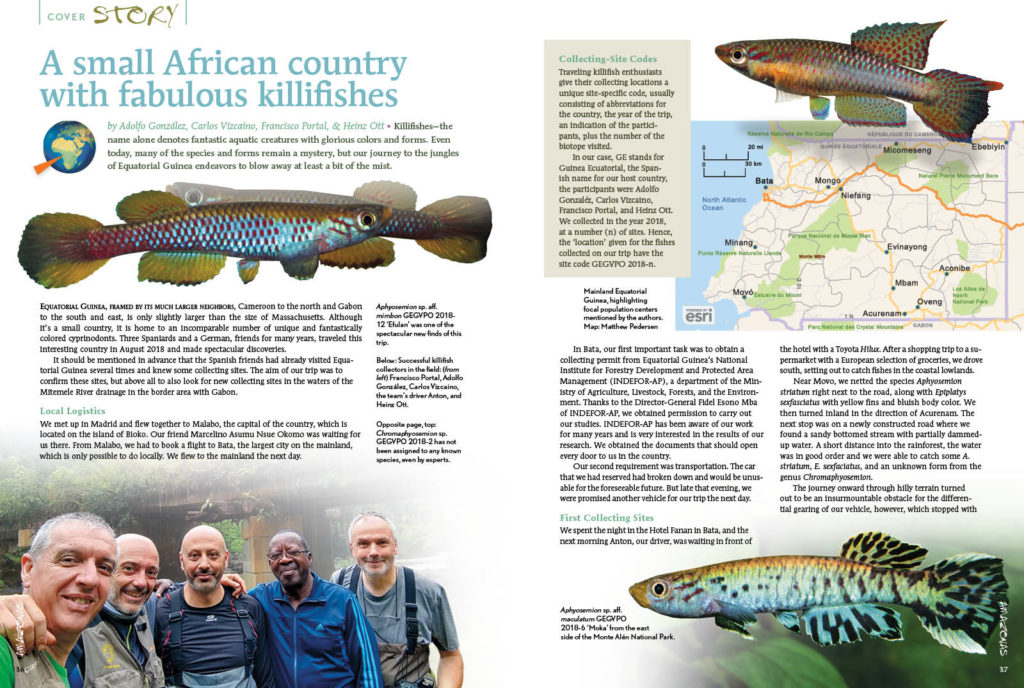Killifishes—the name alone denotes fantastic aquatic creatures with glorious colors and forms. Even today, many of the species and forms remain a mystery, but our journey to the jungles of Equatorial Guinea endeavors to blow away at least a bit of the mist. As told by Adolfo González, Carlos Vizcaino, Francisco Portal, & Heinz Ott