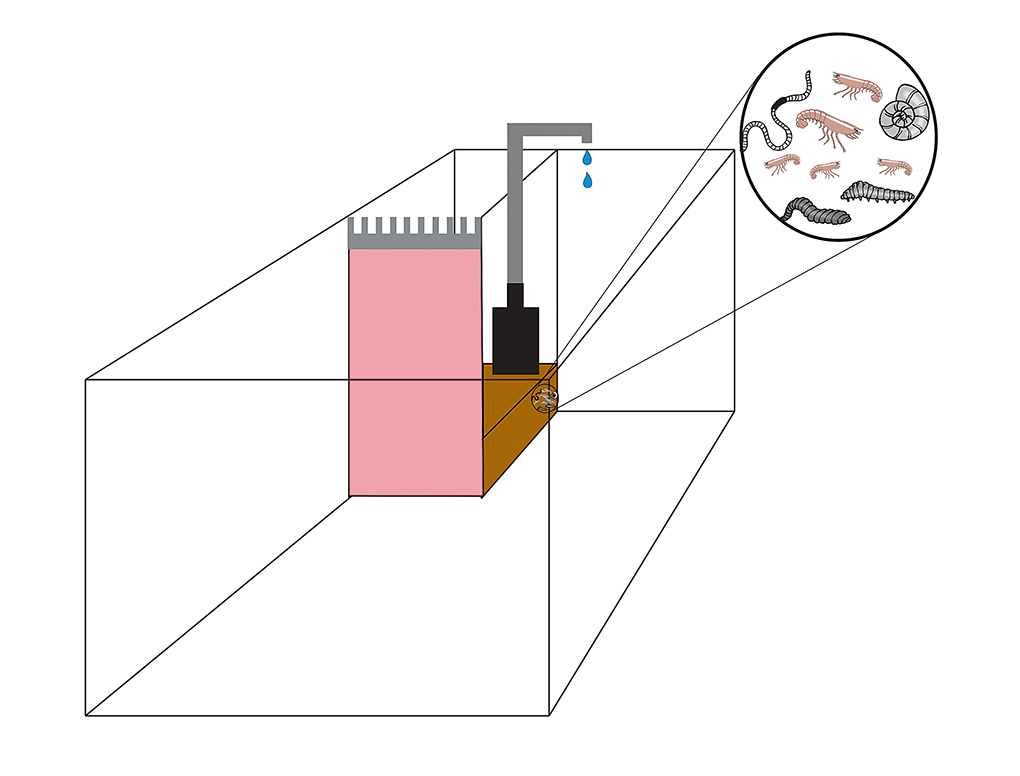 A chamber can be separated off as a refugium in one of the rear corners of the aquarium.