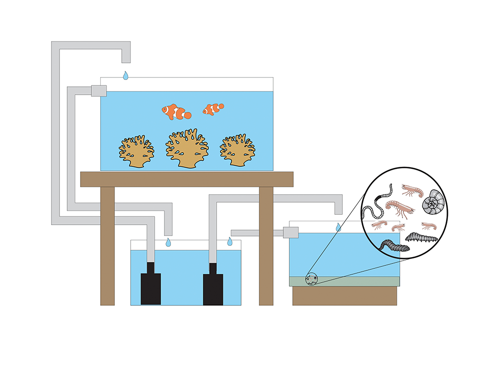 A separate refugium is ideal, as it receives water unfiltered and also returns it to the display tank unfiltered after passing through.