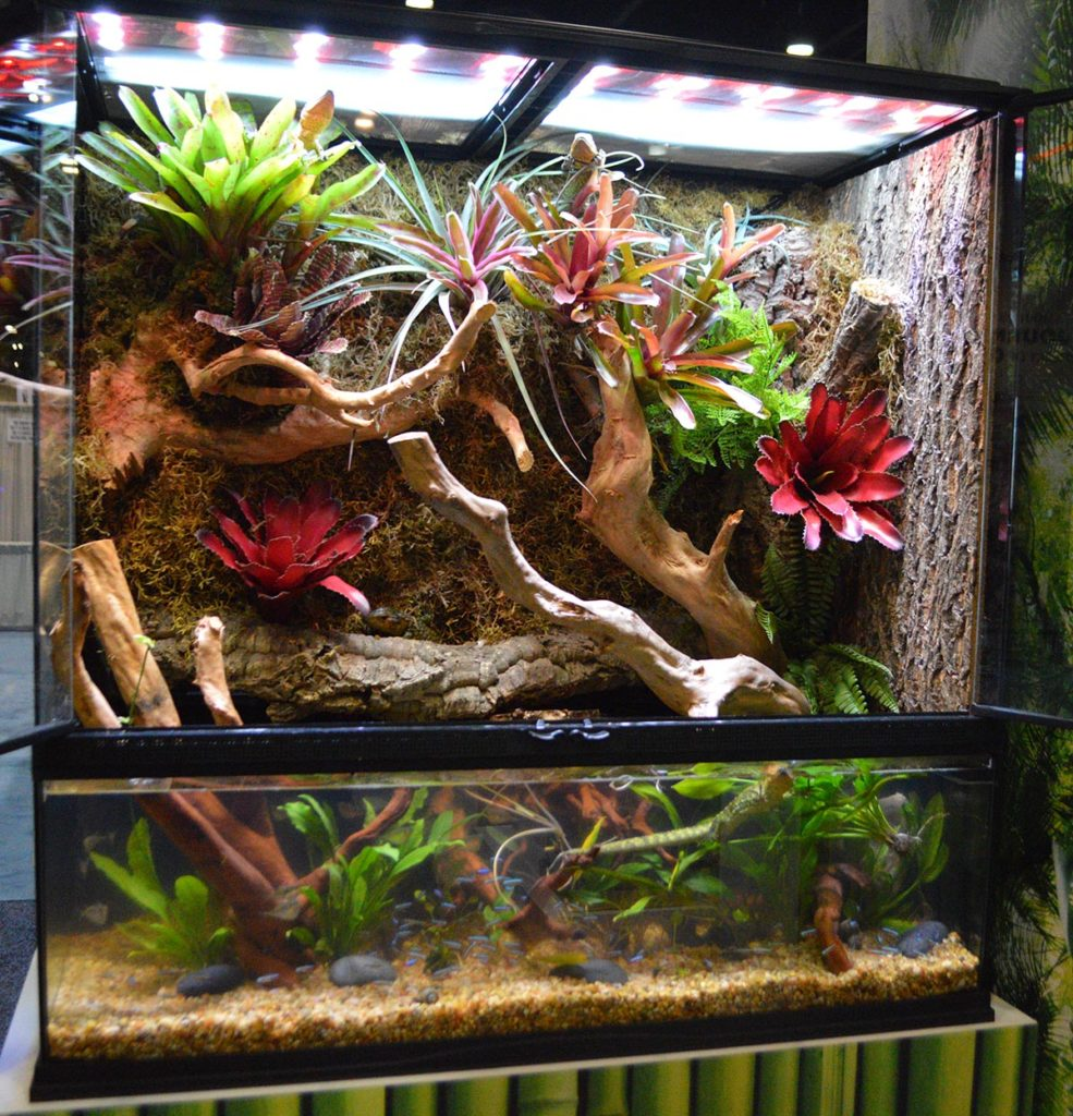 Zoo Med's set up several large-scale paludariums to showcase the merger of terrestrial and aquatic displays. This one featured Dracaena guianensis, the snail-eating Caiman Lizard.