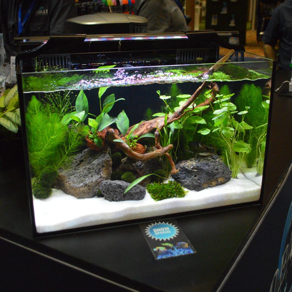 A really put-together desktop aquascape at the Cobalt Booth.