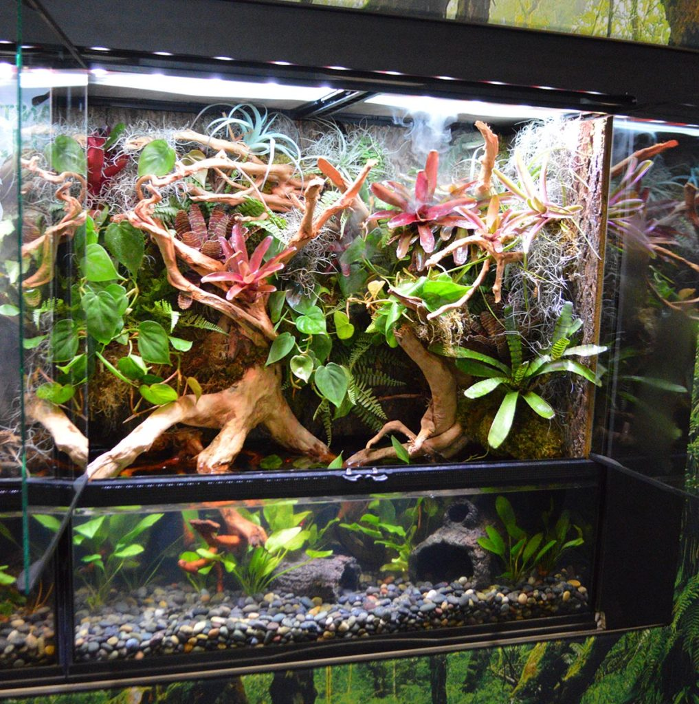 The paludarium on the right was home to Asian or Chinese Water Dragons, Physignathus cocincinus.