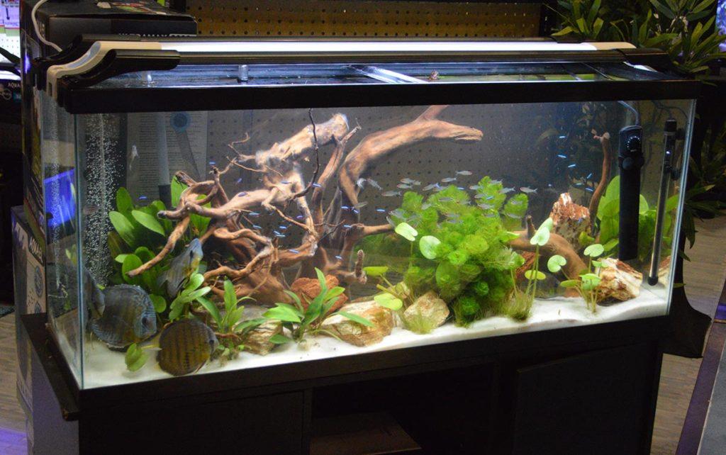 Cobalt Aquatics showcased the Aquael LEDDY SLIM LED aquarium lighting with this display.