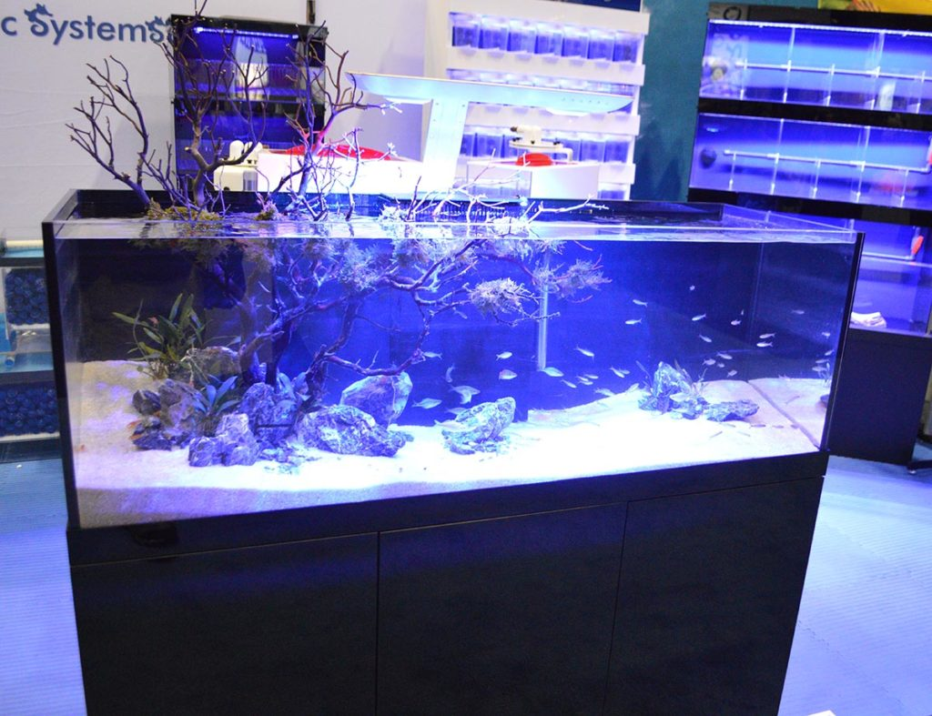 The Manzanita wood erupts from the aquarium in this display by Pro Clear Acrylics.