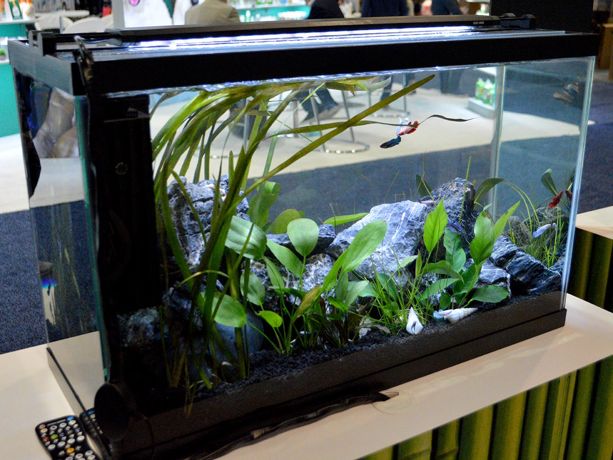 The Freshwater Aquariums And Planted Tanks Of Global Pet Exp