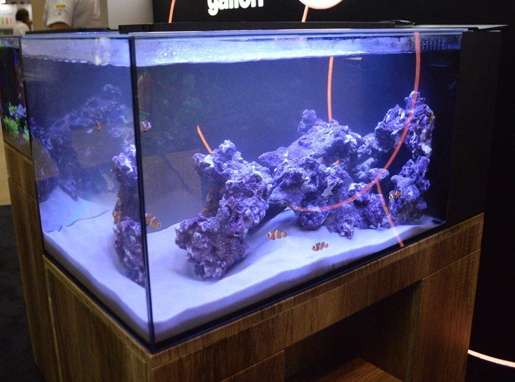 A 25 gallon saltwater aquarium put on display by Marineland.