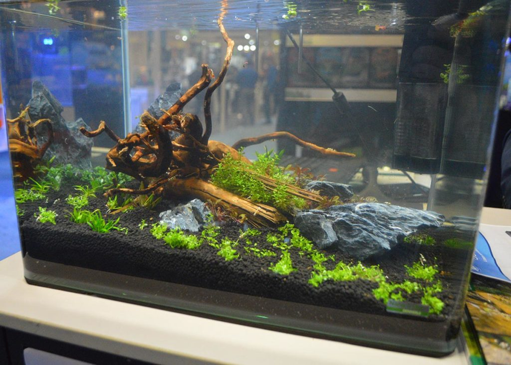 A small shrimp tank on display by JBJ.