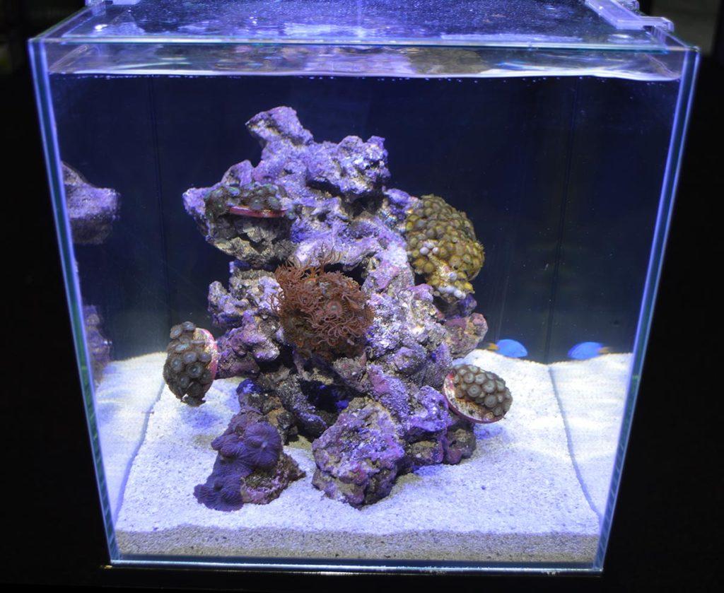 Rimless glass cube reef aquarium display by JBJ
