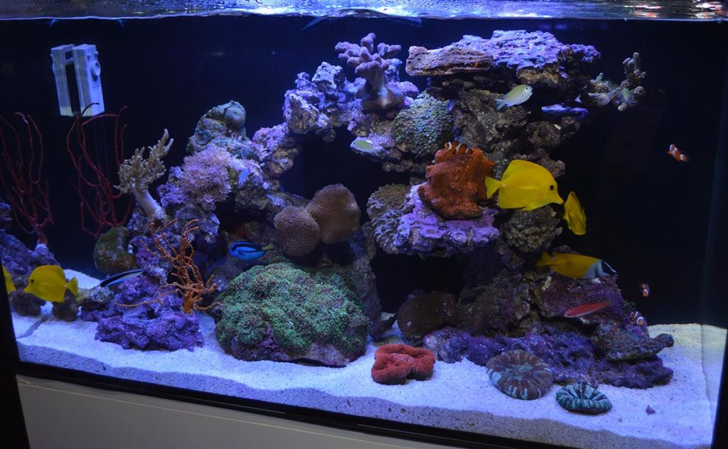 JBJ's AIO (All-In-One) Rimless Flat Panel Aquarium gets showcased with the full reef treatment!