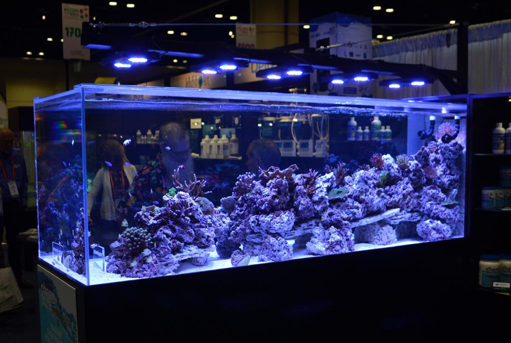 Reef Aquaria Design (RAD) and their 500 gallon all-cultivated reef aquarium always demands several minutes of attention.