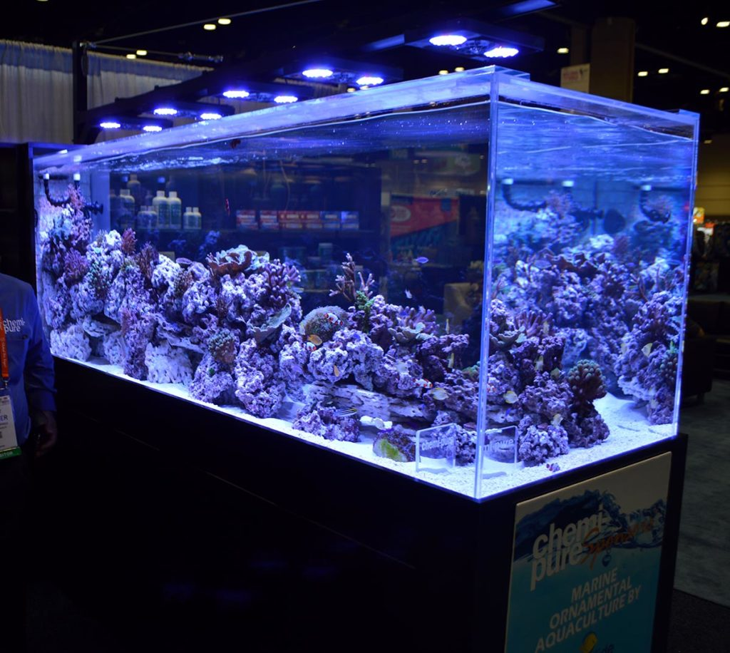 The tank features Radion Lighting, and many captiv-bred and farmed livestock examples from ORA, Biota, and others!