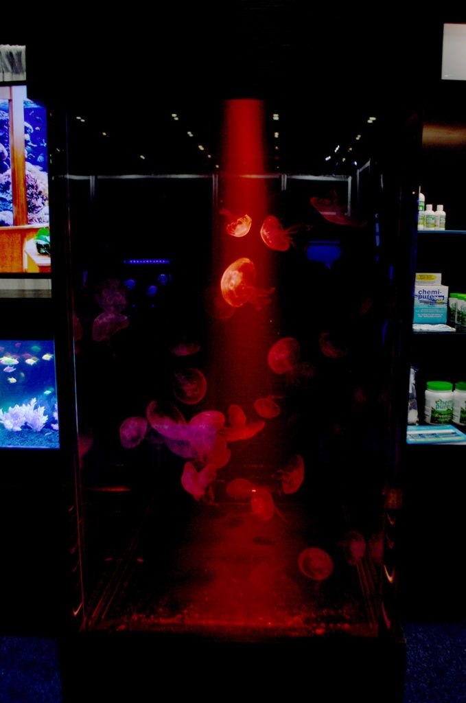 The large jellyfish display was viewable from three sides....