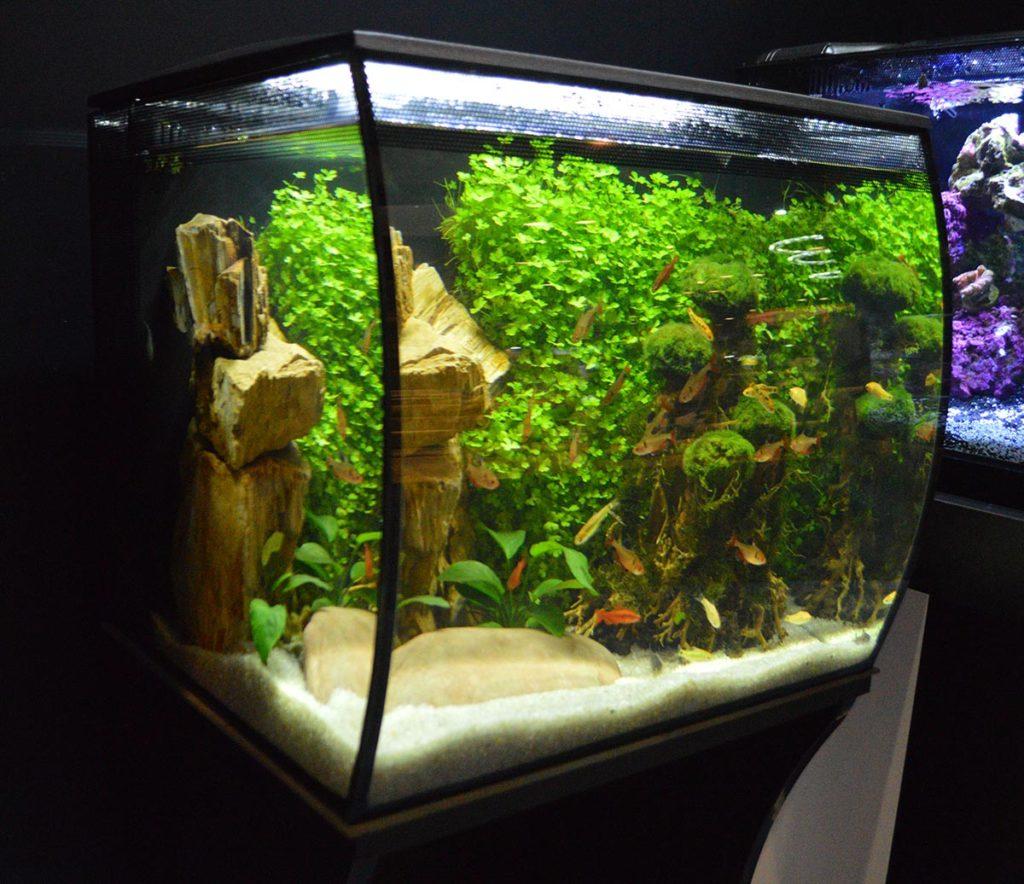The Fluval Flex aquarium in black.